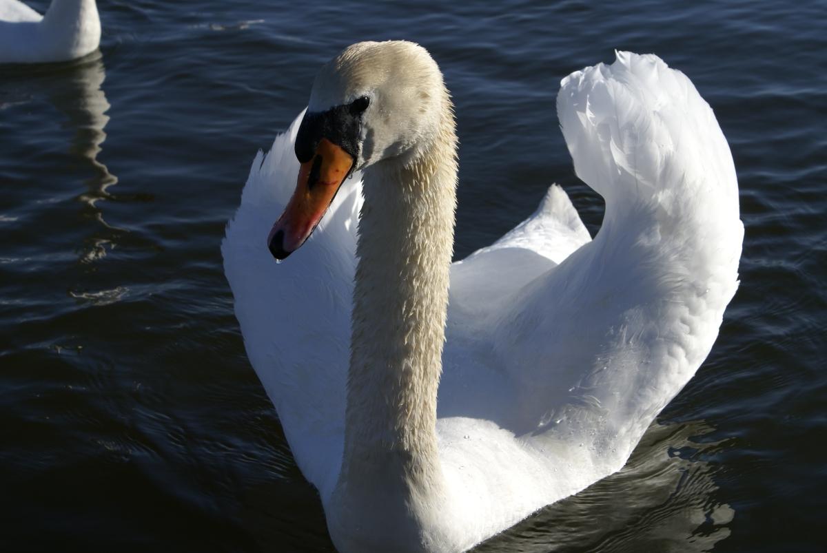 cancerinmythirties.wordpress breast cancer weekly photo challenge changing seasons swan