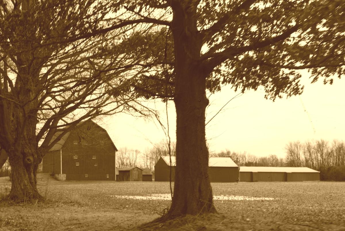farm barn sepia breast cancer thirties 30s memories