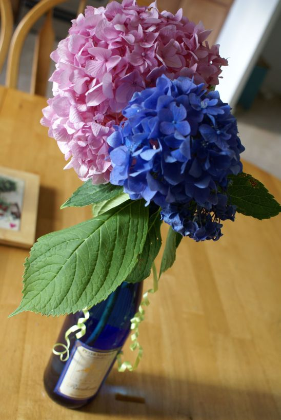 cancerinmythirties.wordpress.com breast cancer thirties 30's 30s hydrangea flowers blue